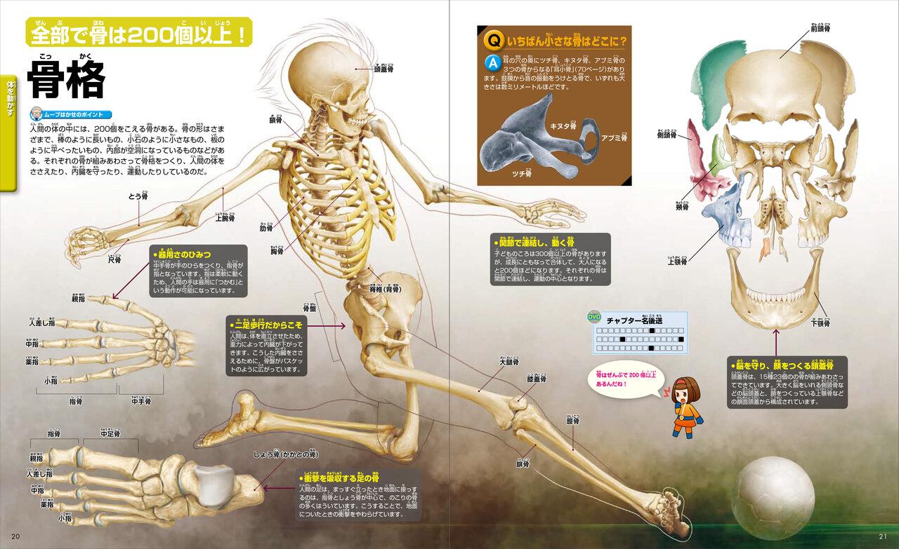 骨は全部で200個以上! 骨格