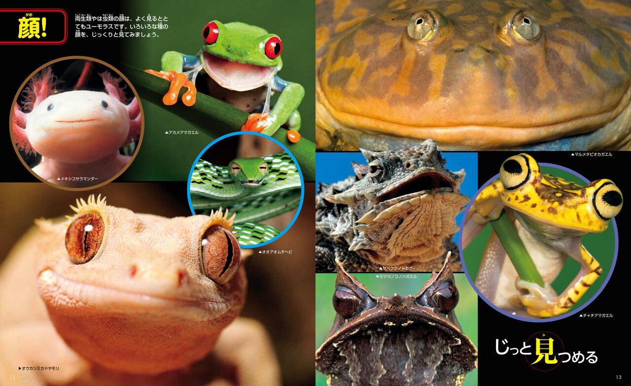 は虫類や両生類の顔はよく見るととてもユーモラス!