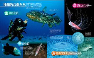 神秘的な魚たち