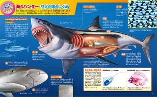サメの体のしくみ