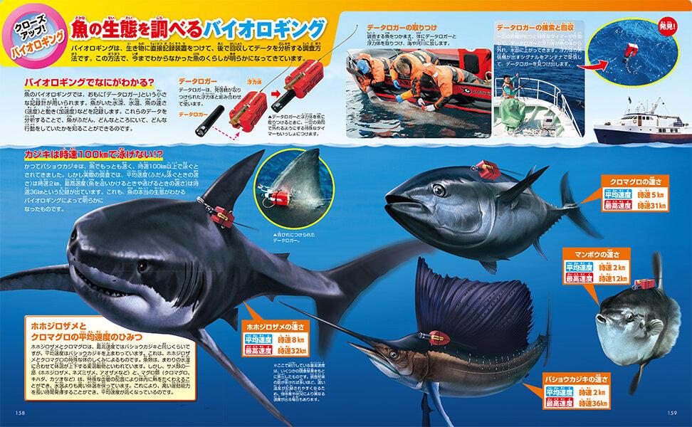 魚の生態を調べるバイオロギング