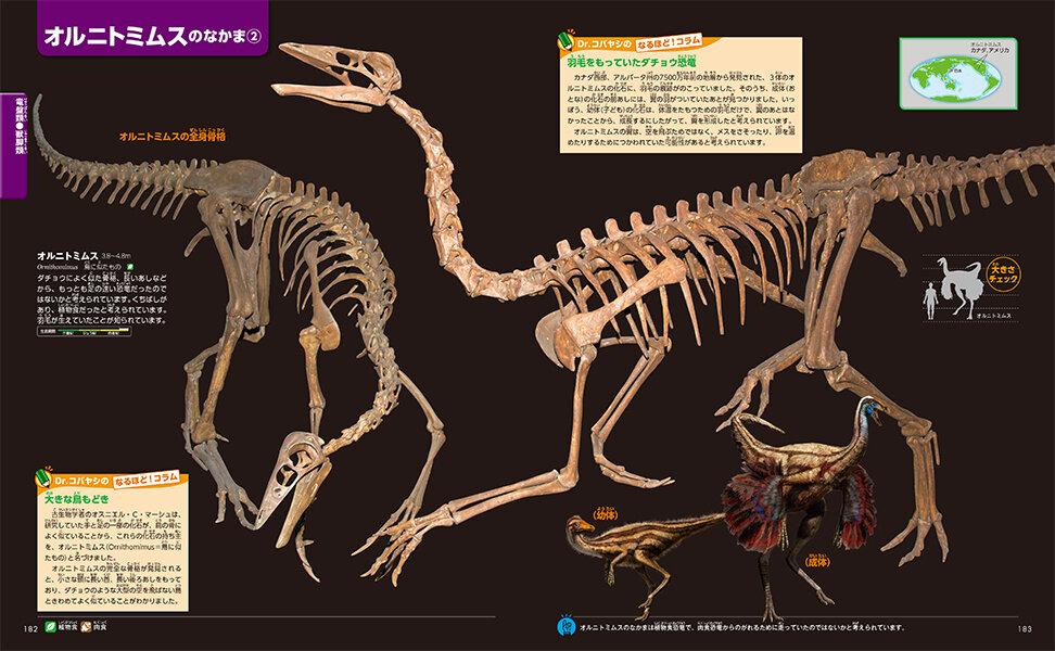 羽毛を持っていたダチョウ恐竜 オルニトミムス