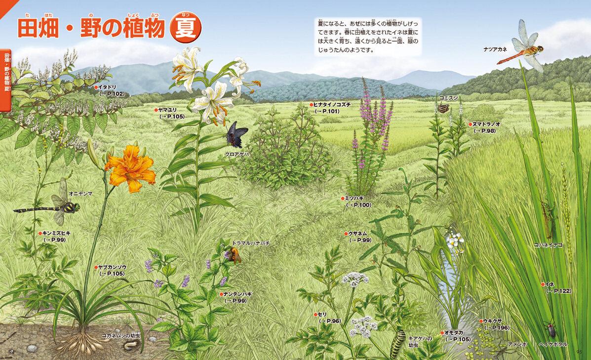 田畑・野の植物 夏