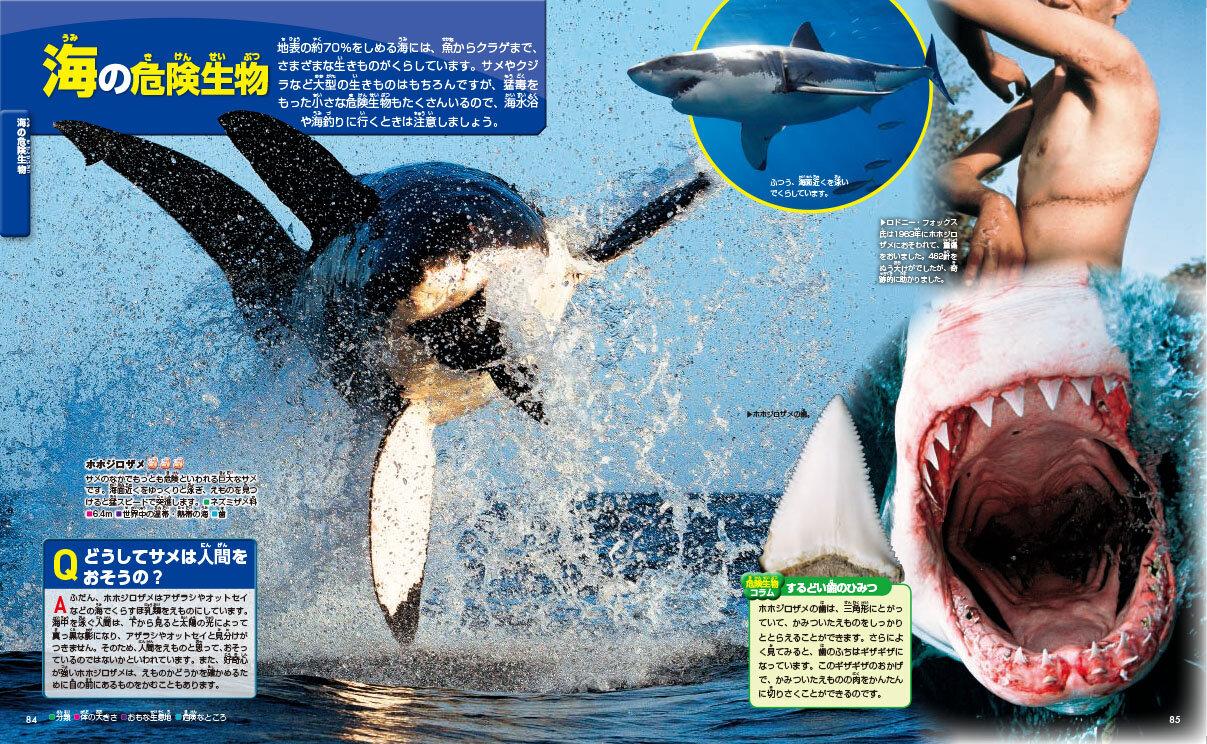 海の危険生物