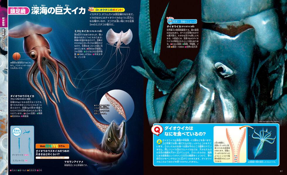 深海の謎多き巨大イカのひみつ