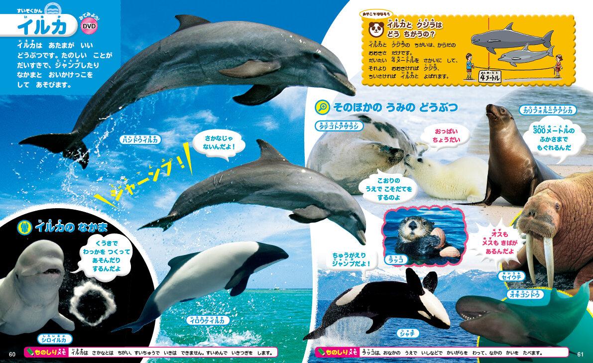 イルカとクジラのちがいって しってる?