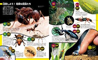 危険な昆虫たち