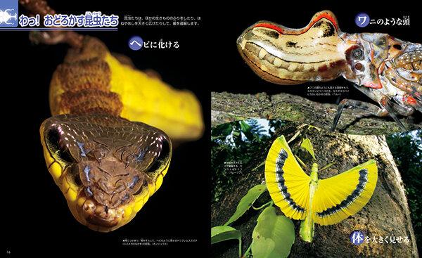 どう見てもヘビにしか見えないスズメガの幼虫