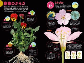 植物の構造もしっかり学べる!