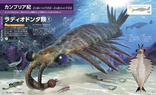 カンブリア紀で最強の捕食者だった動物・アノマロカリス!