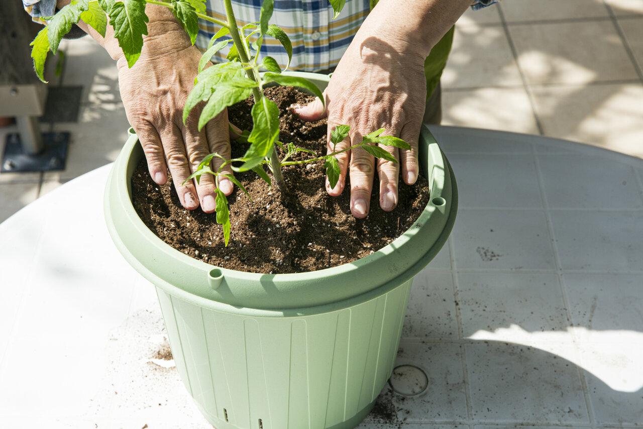 ⑤苗に土をかぶせ、表面をならす。<br> <br> 撮影 深澤慎平