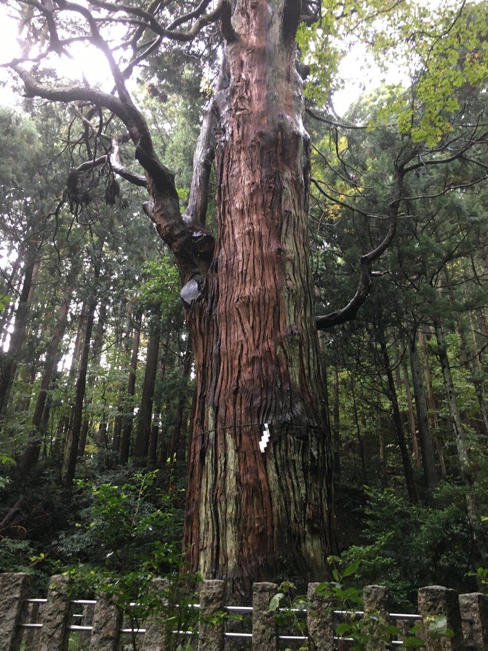 雨に濡れた杉の神々しさに圧倒されます