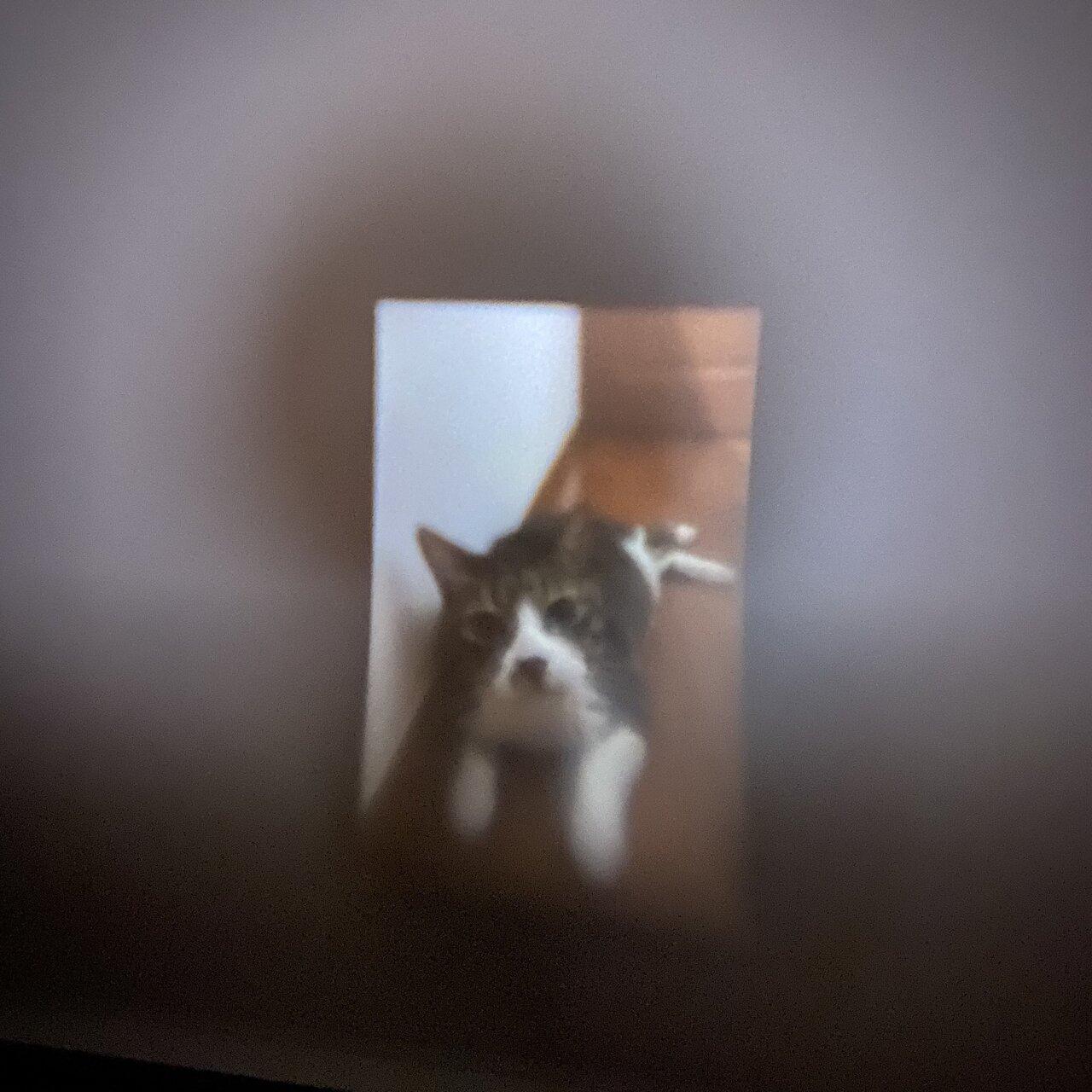 天井に映った写真。撮影:Yuchi