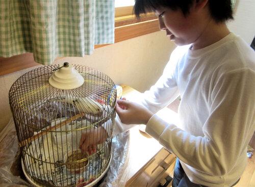 小鳥も大切な家族だから心をこめて世話をする小5