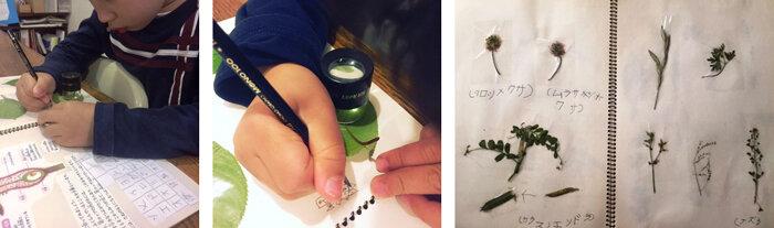 左:桜の葉の研究をする6歳児 中:虫眼鏡で葉を観察し模写する 右:自然は最高の素材