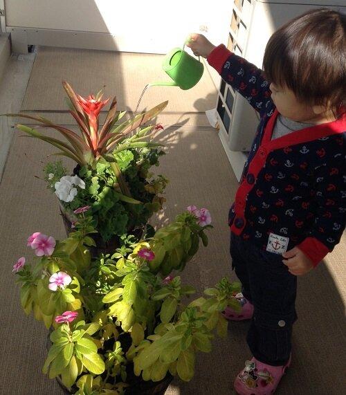 観葉植物に水をやる 2歳 <br> 自然を大切にする心が他者への思いやりを育てる