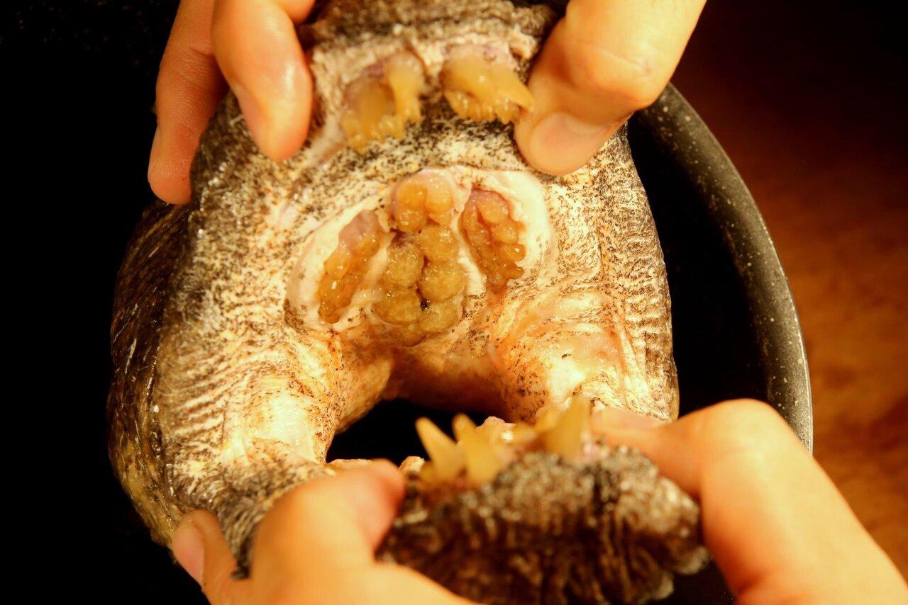 オオカミウオの口内。口蓋にも臼歯が並ぶ。<br>