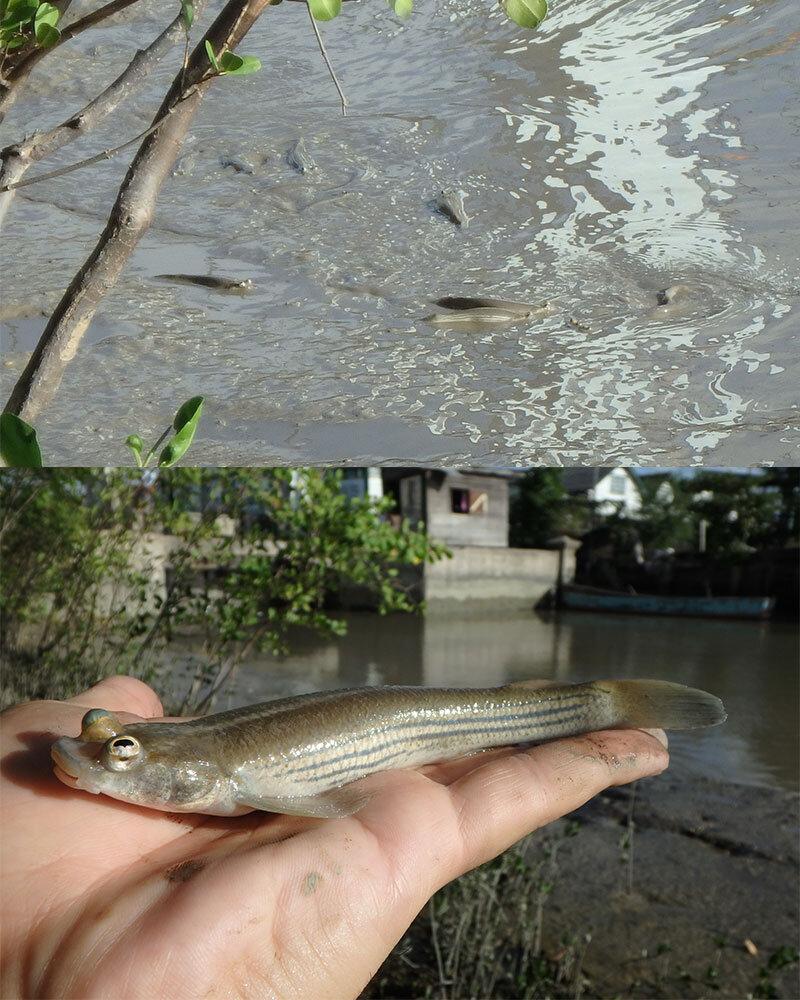 水の中が危ないと察するとカエルのように陸へ上がる。