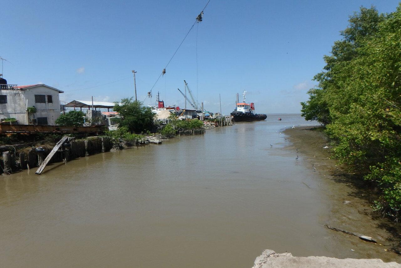 ヨツメウオがくらしている川。海水が混じっているのでちょっとしょっぱい。岸にはマングローブがしげっている。<br>