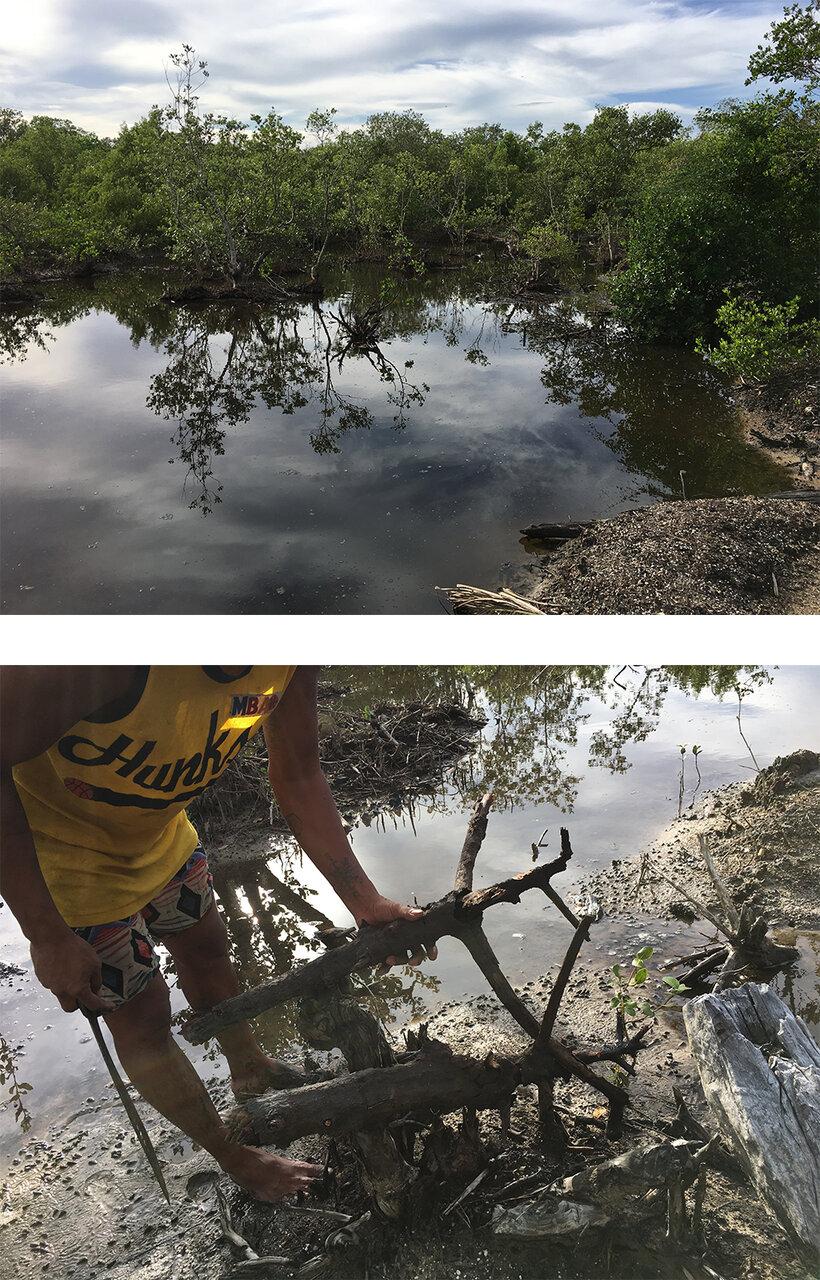 (上)フナクイムシがくらす東南アジアのマングローブ林。<br> (下)見た目にはごくフツーの流木。これを割ると……。