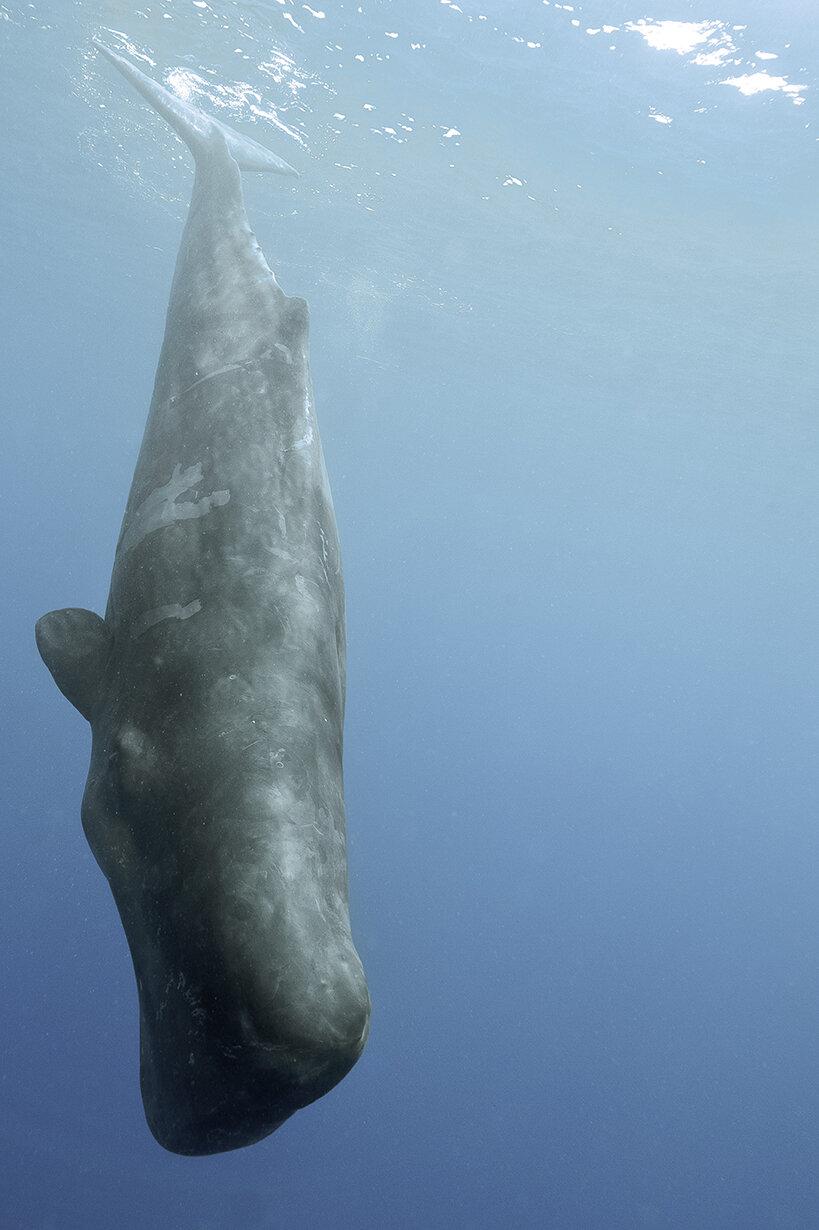 (EX MOVE 深海の生きもの)P23に関連