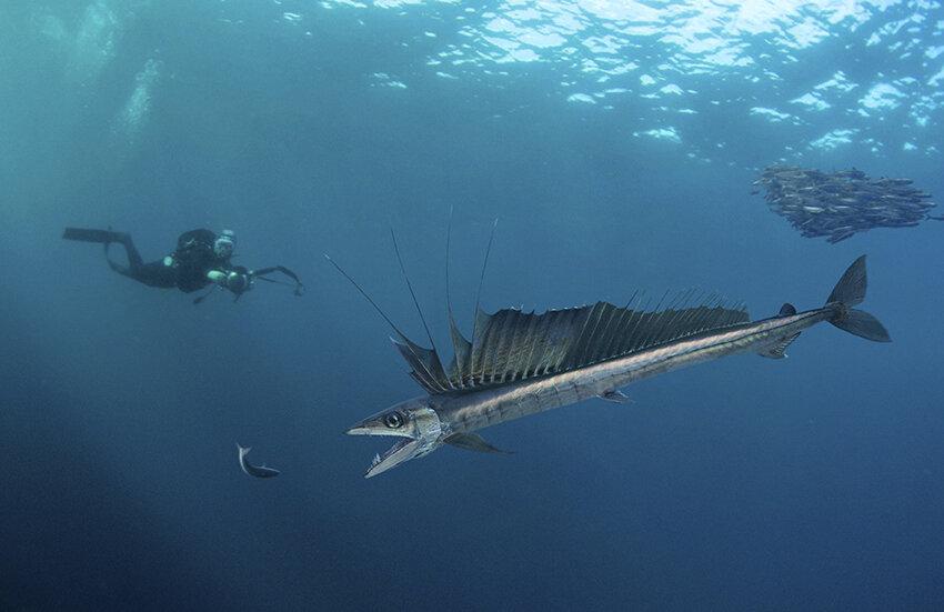 (EX MOVE 深海の生きもの)P47に関連