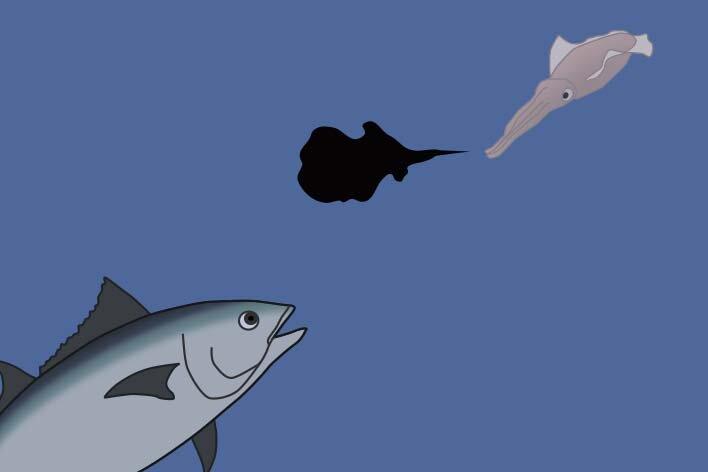 イカの墨の役割イメージ