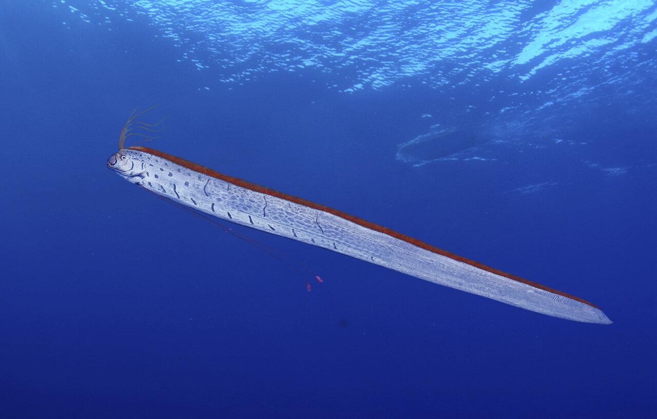 (EX MOVE 深海の生きもの)P28に関連