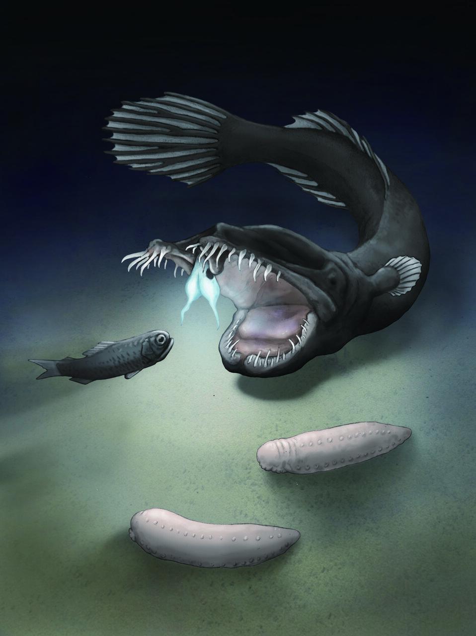 (EX MOVE 深海の生きもの)P34に関連