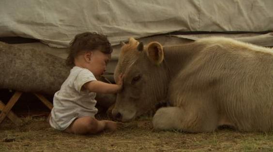 モンゴルのバヤルジャルガルちゃんは、牛や羊と一緒に暮らしている。  画像提供:エスパース・サロウ