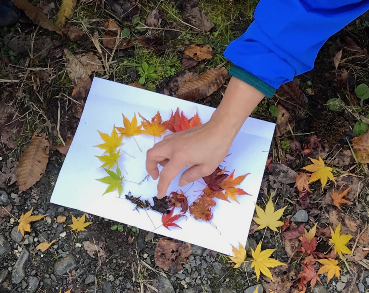 """秋にはなぜ葉が紅葉するのか。実物を並べて、葉っぱの一生を考えます。<br> <small class=""""font-small"""">写真提供:高見幸子</small>"""