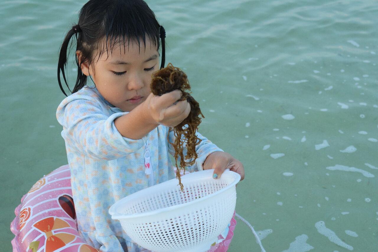 家族で海に行ったときにもずくがたくさん採れ、その場に居合わせた友達のお母さんがザルを貸してくれました。島では毎年、3月下旬〜4月頃に1年分を採ります。  写真提供:片岡由衣