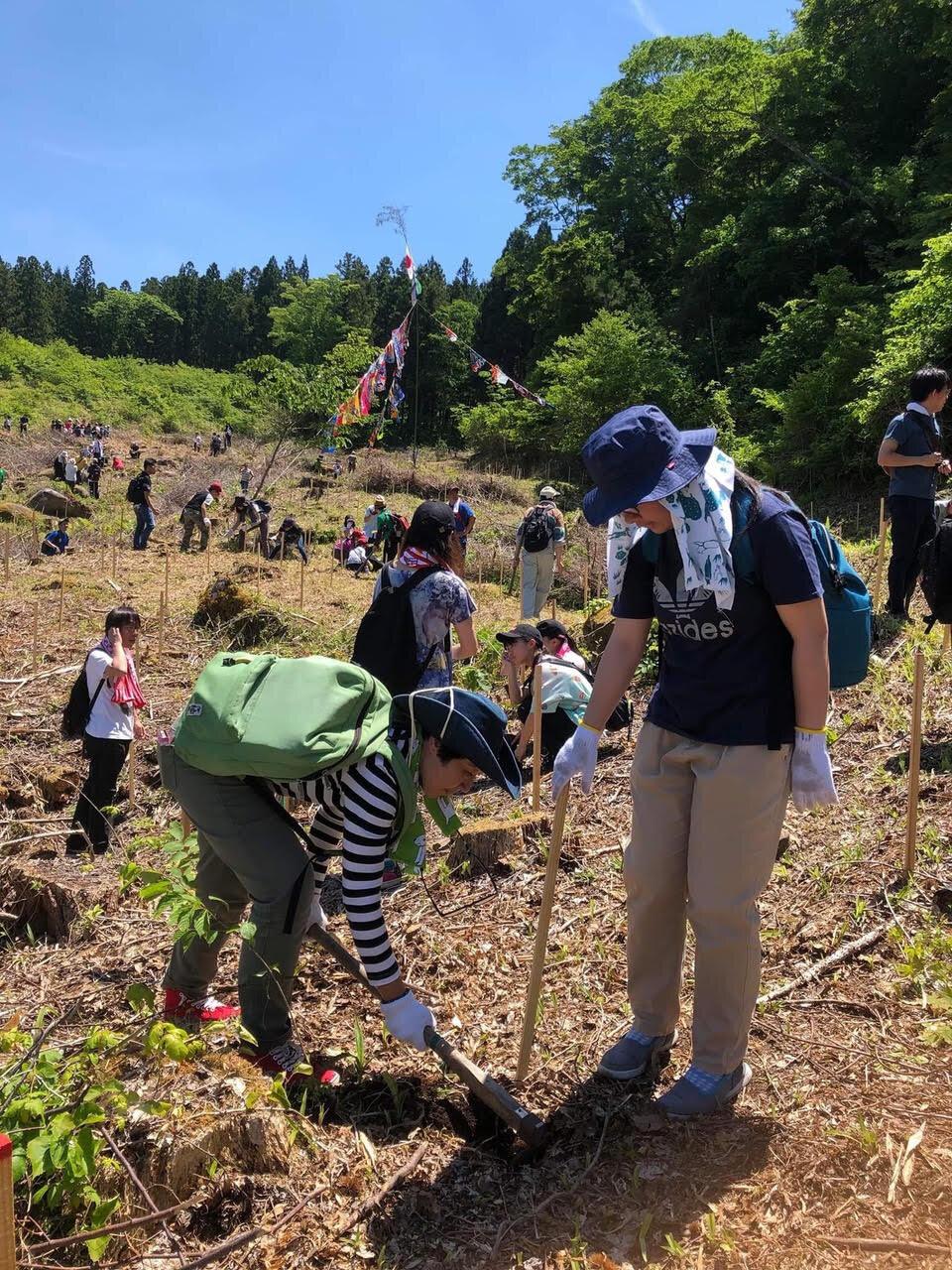 植樹するスギヤマカナヨさん(左)